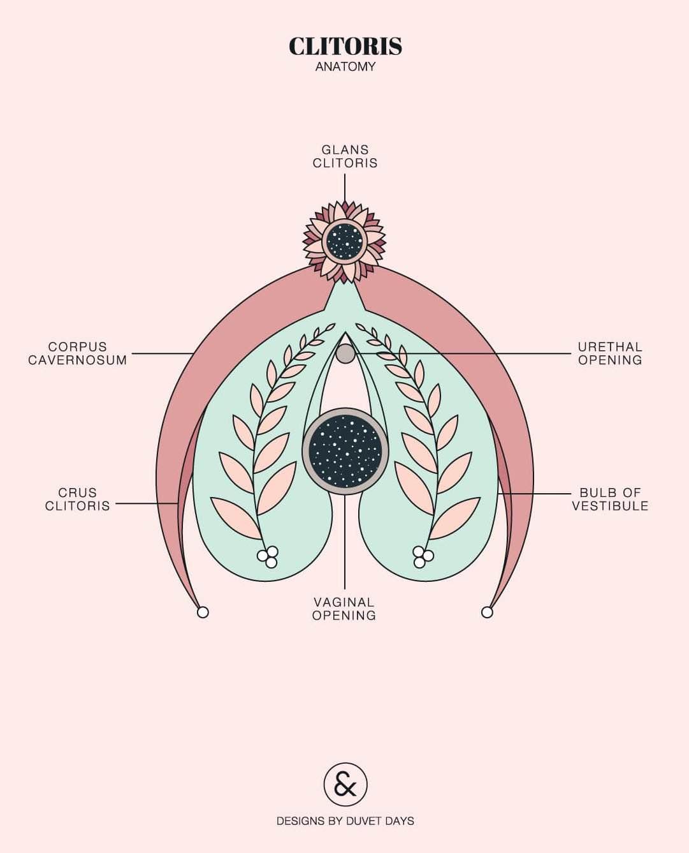 clitoris plural